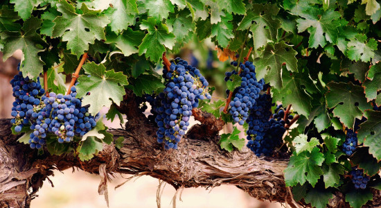 Al fakher: Виноград, Гуава, Персик