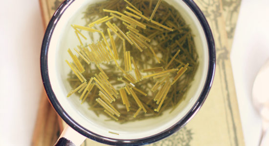 Land-of-the-Pines-Immunity-Boosting-Pine-Needle-Tea_6924